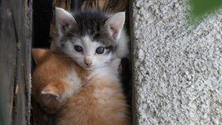 2 Chatons de deux semaines attendant tranquillement leur maman dans leur cachette - par Wooki - www.wooki.fr