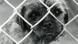 Chien en cage - par Woody Hibbard - https://www.flickr.com/photos/pamwood707/