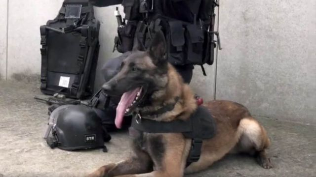 Graf chien d'assaut du GIGN - par Groupe d'Intervention Gendarmerie Nationale - https://www.facebook.com/GroupeInterventionGendarmerieNationale/