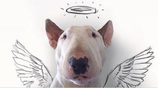 Jimmy Choo, English Bull Terrier sert de modèle à Raphael Mantesso - par Raphael Mantesso - http://instagram.com/rafaelmantesso