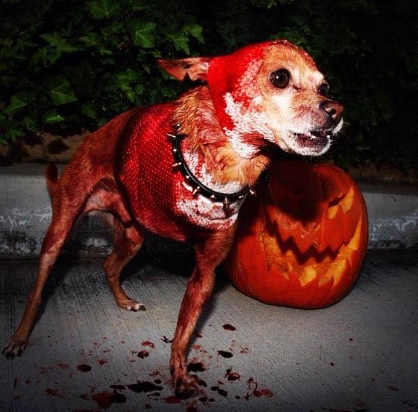 Mon chien a rencontré Freddy