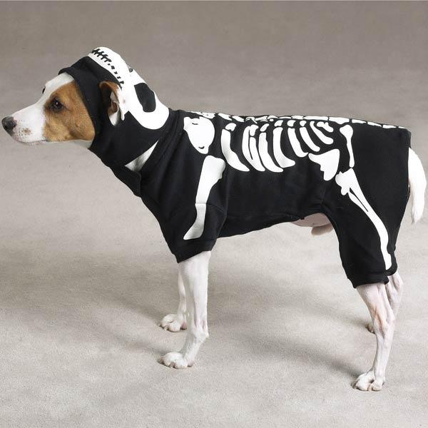 Chien déguisé en fantomes