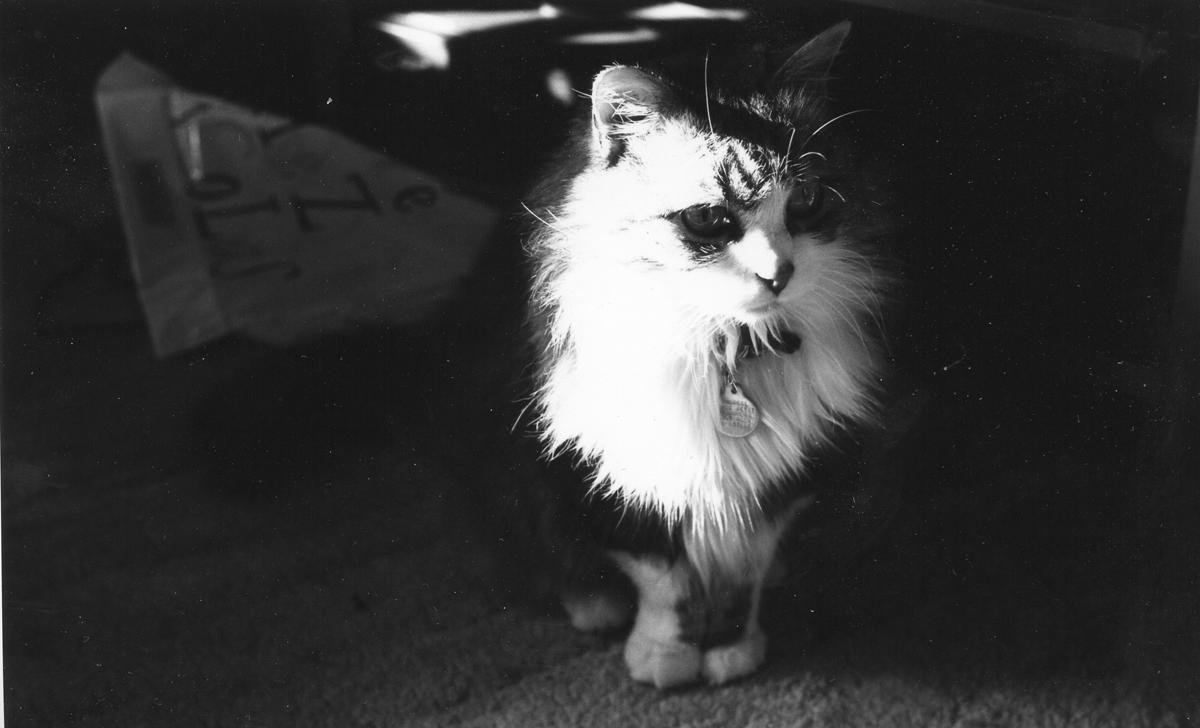 Photo de Minette, chat